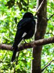 Black Bird by Viole-n-tDreams