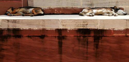 Let sleeping dogs lie by th3rdeye
