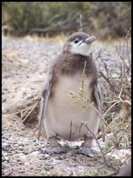 .little pinguin by Mortor
