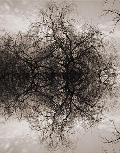 Dark Wood by matmoon