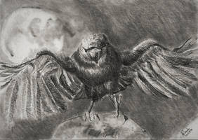 Crow taking off by SulaimanDoodle
