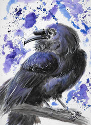 Late September watercolor raven by SulaimanDoodle