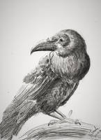 Raven October thirtieth by SulaimanDoodle