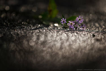 After the Rain by JaclynTanemura