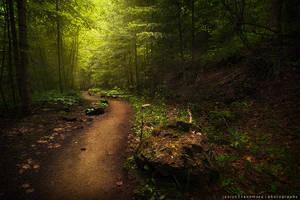 Wander by JaclynTanemura