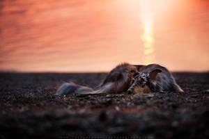 breaking dawn by JaclynTanemura