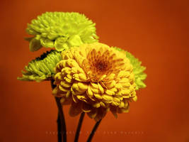 Flowers 29 by eyadness