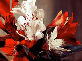 Flowers 32 by eyadness