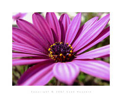 Flowers 9 by eyadness