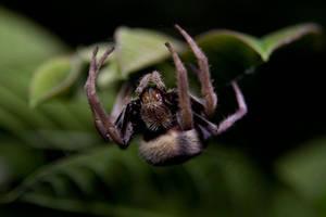 Garden Orb Spider 01 by ShannonIWalters