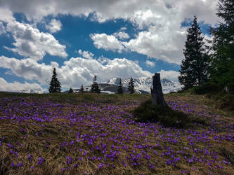 Fresh smell of spring by EnacheArmand