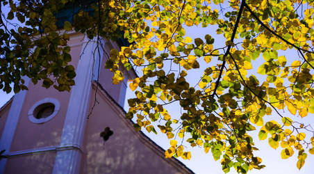 The last leaves by EnacheArmand