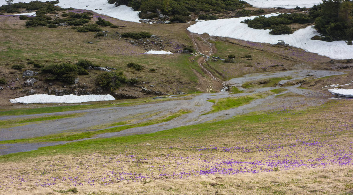 Wet road to the glacial lake by EnacheArmand