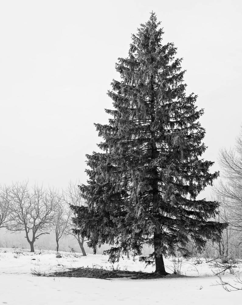 Tree of Citadel Glade by EnacheArmand
