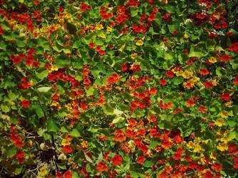 Les fleurs by MyroniO