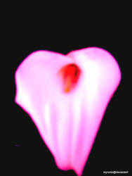 woman's heart by MyroniO