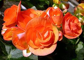 Thursday Flower. by Talk3talk4