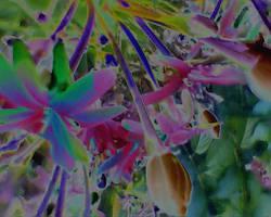 Flowers. by Talk3talk4