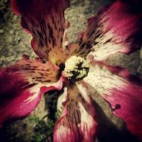flower power by haruwen