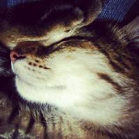 sleeping beauty by haruwen