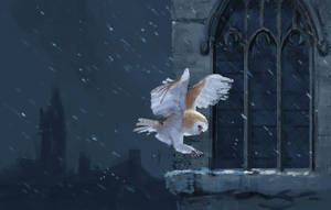 A little owl sketch by LeeshaHannigan