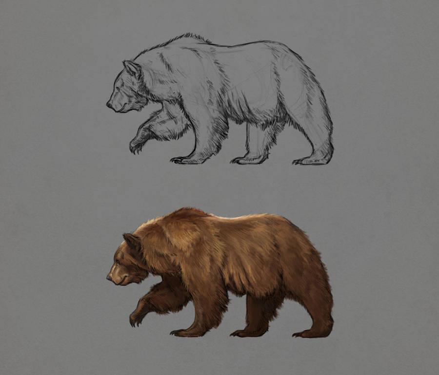 Bear Studies 1 by LeeshaHannigan