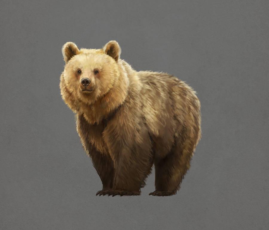 Bear Studies 2 by LeeshaHannigan