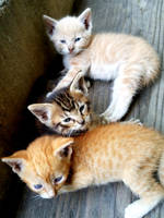 Kittens by GUDRUN355
