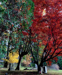 Trees and colors by GUDRUN355