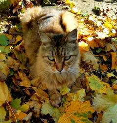 Gunther in the leaves by GUDRUN355