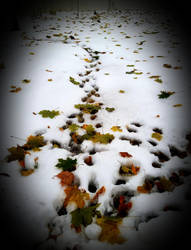 Snow, Leaves and little footprints by GUDRUN355