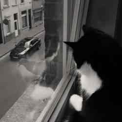 Curiosity Killed The Cat by Wodanislav
