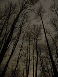 The shadow forest~ by Matthew-Fuller
