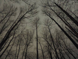 Ghostly trees~ by Matthew-Fuller