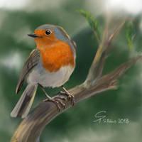 Rotkehlchen - Robin by steffchep