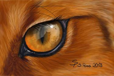 Foxtober Day 4: Window by steffchep