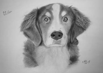 Dog for Liz :-) - Pencil drawing by Solty88