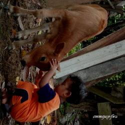Mammalian Friendship by emmejay-fwz
