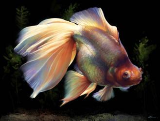 Goldfish by zhuzhu