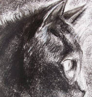 Poupine in charcoal by philippeL
