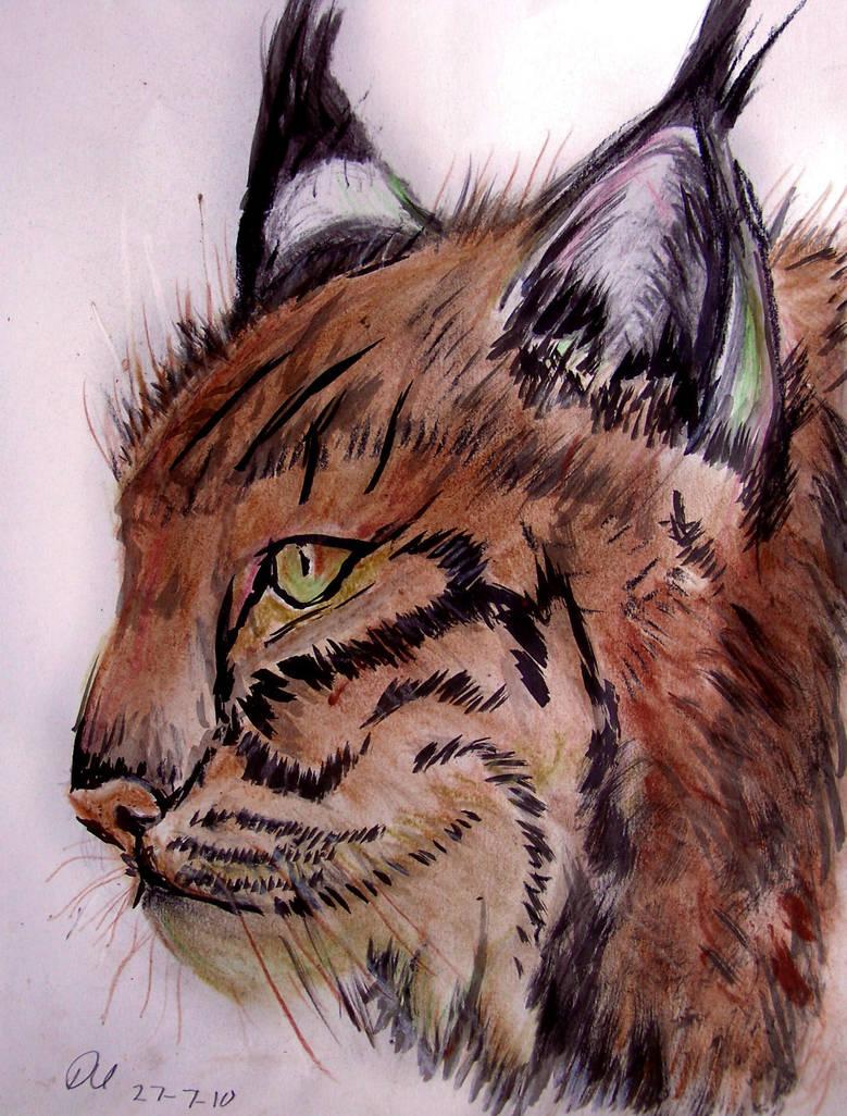 Lynx by philippeL
