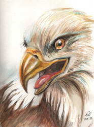 Eagle for Flori by philippeL