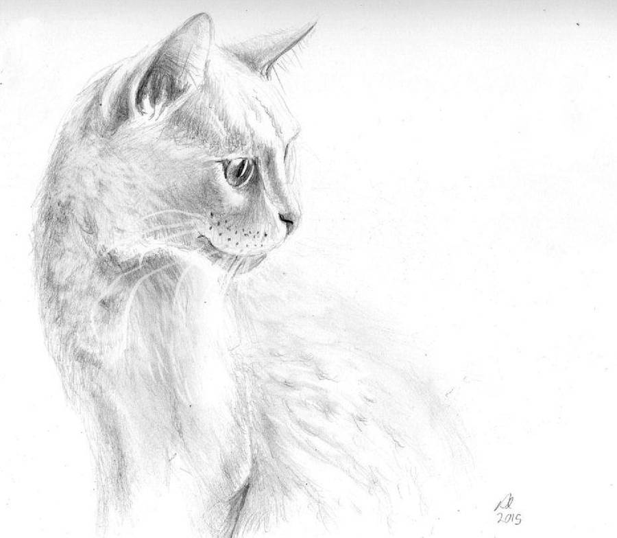 White Cat by philippeL