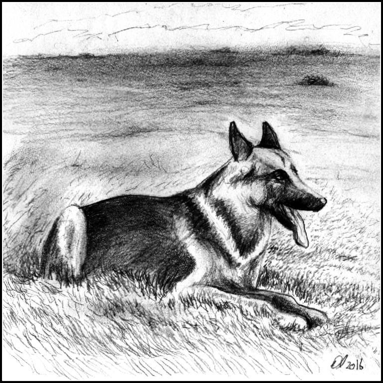 German Shepherd by philippeL
