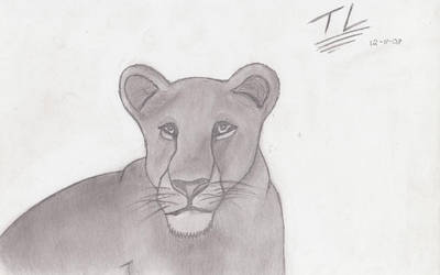 My Realistic Lioness by This-Land