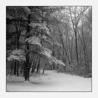 Nature Walk by f0rTyLeGz