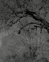 Darkened dreams... by thewolfcreek