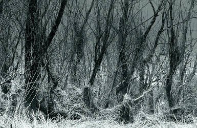 Phantoms... by thewolfcreek