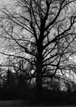 Black tree... by thewolfcreek
