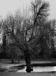 A woeful tree... by thewolfcreek